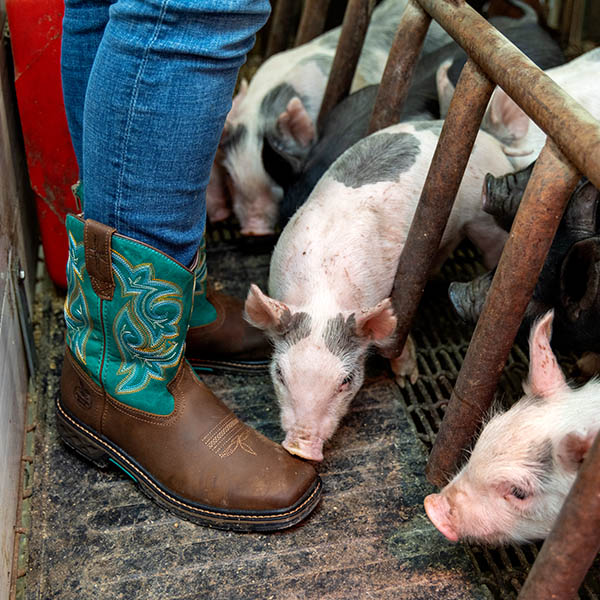 Piglet sniffing a pair of Kids' Carbo-Tec LT Boots